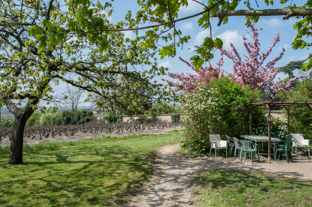 Au bout du jardin, la vigne.